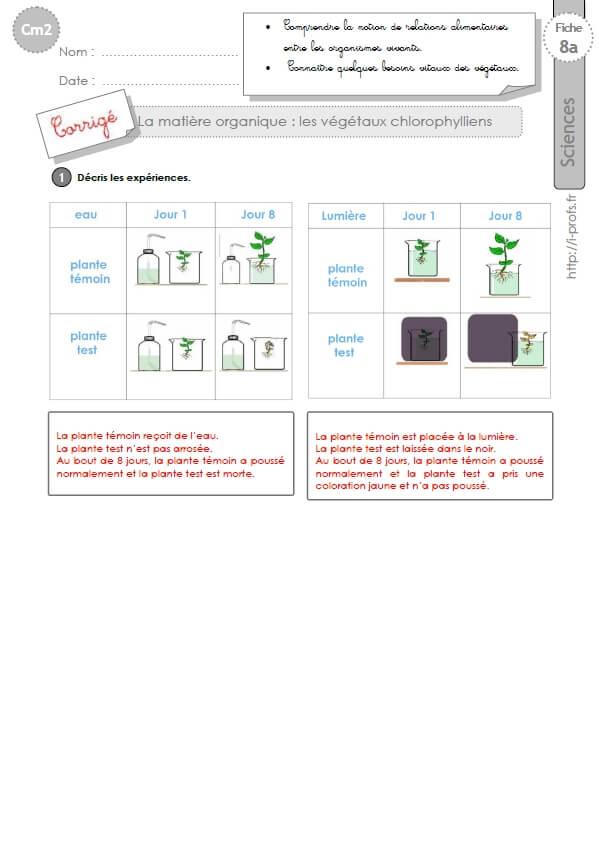 CM2: EXERCICES sur La matière organique - Les végétaux ...